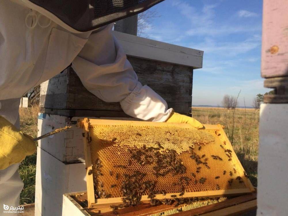 رنگ موم عسل طبیعی