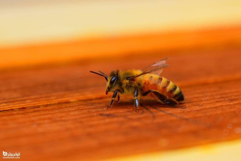 خواص موم زنبور عسل