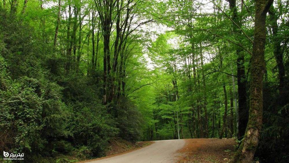 معرفی جنگل پلنگ دره