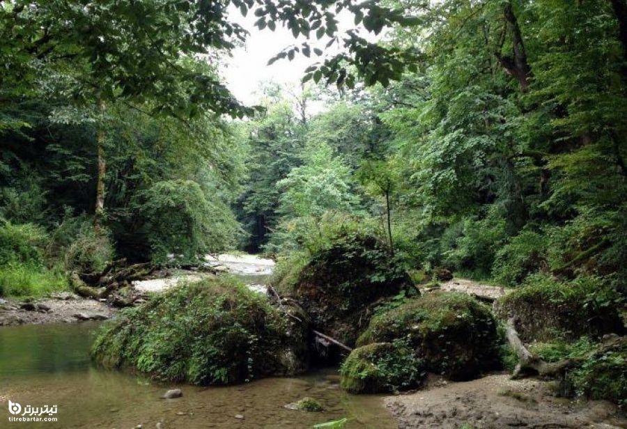 چرا بهجنگل پلنگ دره سفر کنیم؟