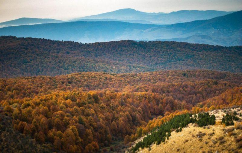 جنگل راش سوادکوه یک معجزه ی زیبا
