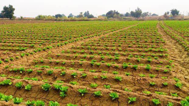 خسارت سیل به بیش از 150میلیارد تومان به کشاورزی حمیدیه خسارت وارد کرد
