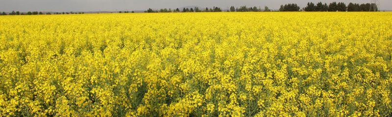 مهد کشاورزی در غرب استان تهران
