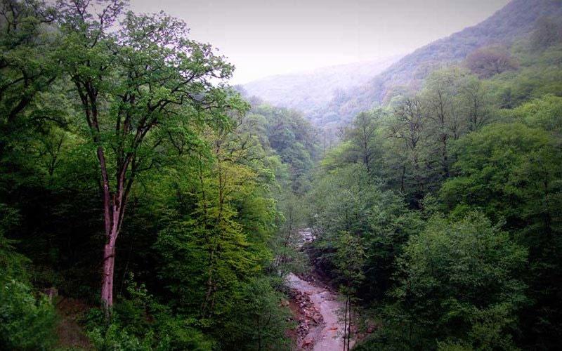 قدیمیترین جنگل ایران کجاست؟