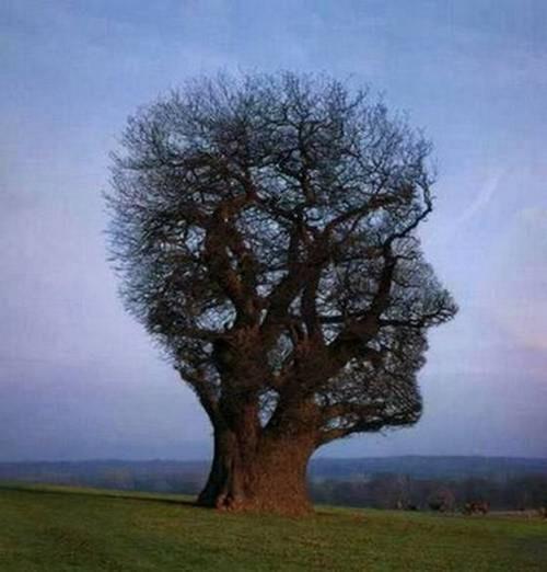 جالب ترین درختان در کجا قرار دارند