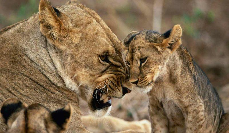 جذابیت و زیبایی های حیات وحش