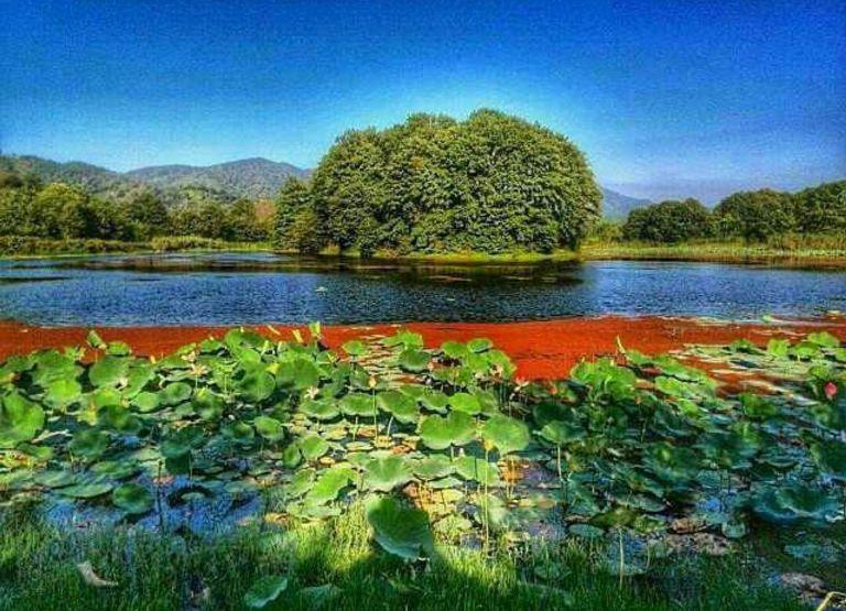 تالاب سوستان؛ مزرعه نیلوفرهای آبی