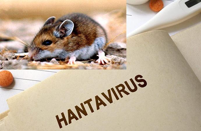 هانتا چگونه ویروسی است؟