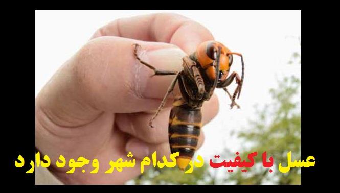 عسل با کیفیت در کدام شهر وجود دارد؟/فیلمتشخیص عسل طبیعی از تقلبی