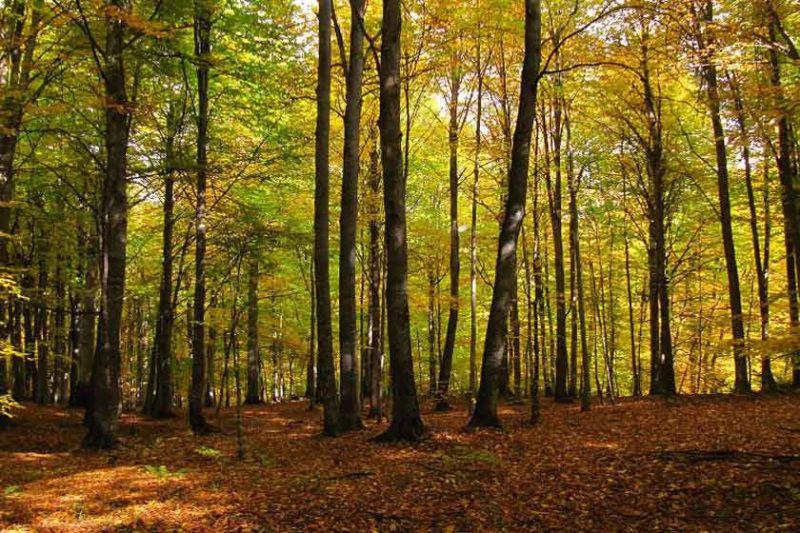 سفری به دل جنگل مرسی سی یا راش
