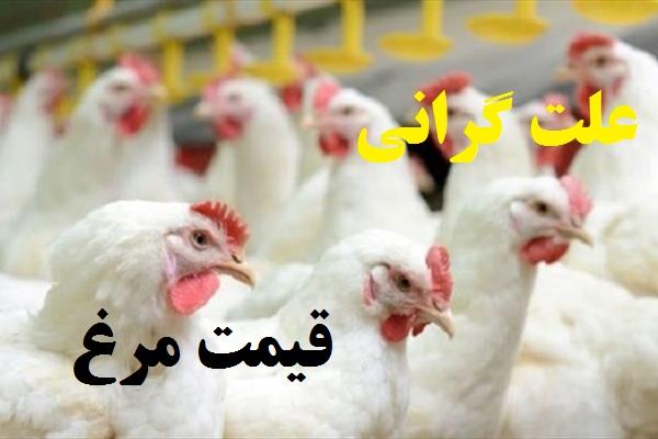 علت اصلی گرانی مرغ در آبان 99