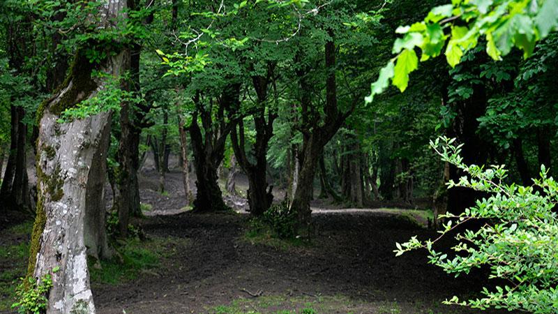 جنگل بلیران منطقه ی بکر آمل