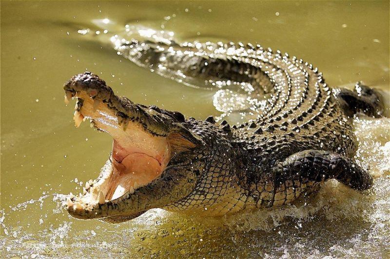 سیر تا پیاز ماجرای تمساح در دریاچه چیتگر