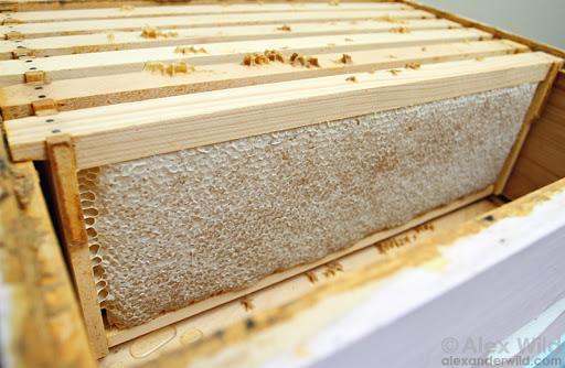 نحوه نگهداری از زنبورعسل در زمستان