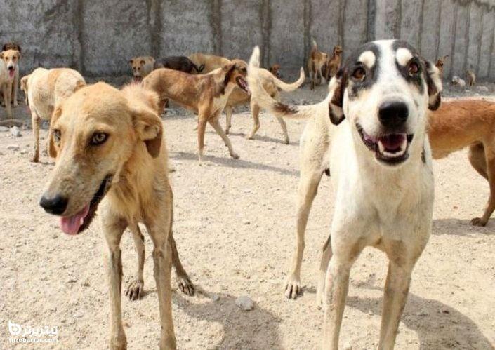 ماجرای کشته شدن حسن مولازاده نوازنده تومبا توسط سگ های ولگرد+عکس