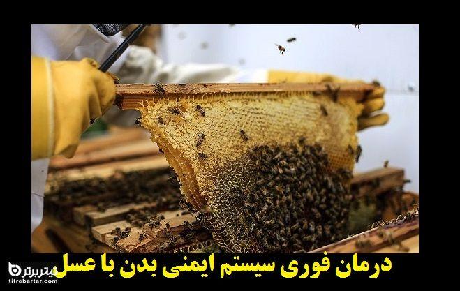 تقویت فوری سیستم ایمنی بدن با عسل