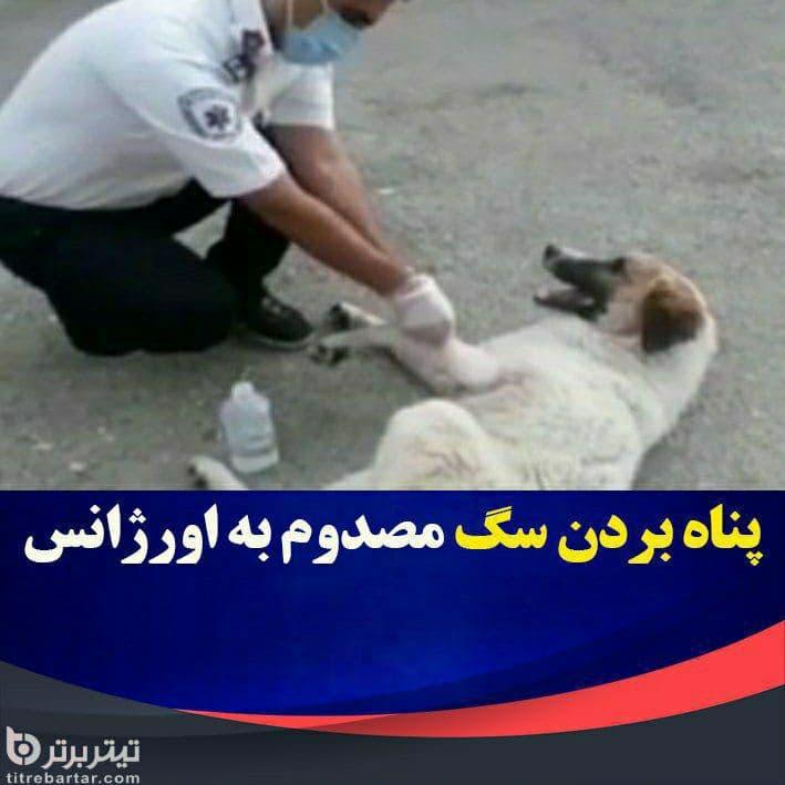 فیلم| مراجعه یک سگ با دست شکسته به پایگاه اورژانس جادهای