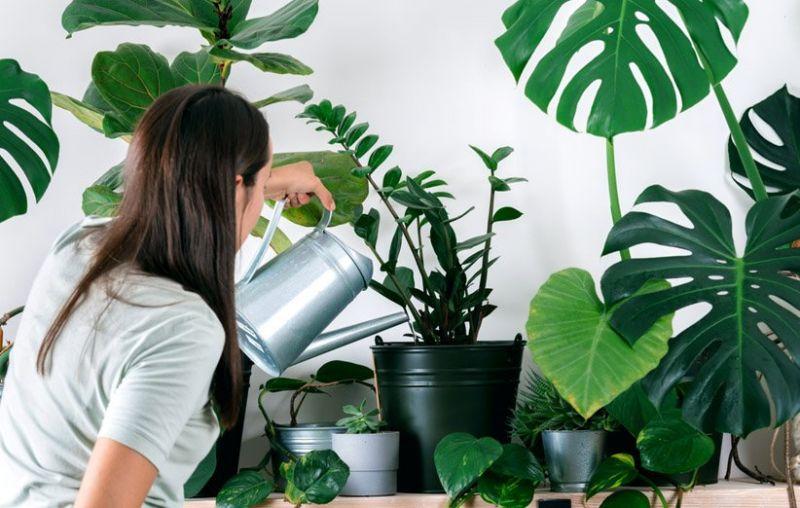 چگونه گیاهان در حال مرگ خود را نجات دهیم؟