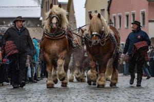 جشنواره سالانه اسب در شهر