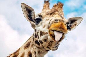 تصاویر جذاب از حیوانات مختلف