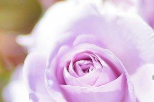 تصاویر آرامش بخش از گل های زیبا