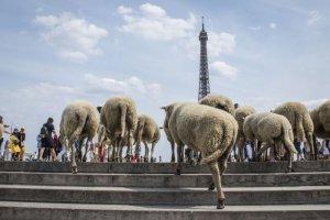 از چرای گوسفندان در برج ایفل تا فستیوال ضیافت شام در نیویورک