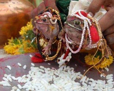 از ازدواج و طلاق قورباغهها در هند تا ساحل شیشهای کالیفرنیا