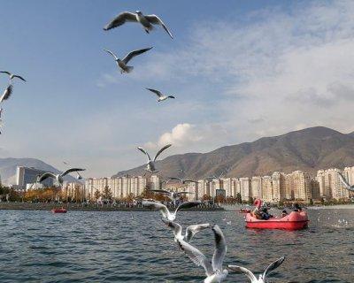 تصاویری از کوچ پرندگان مهاجر به پایتخت