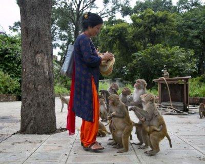 تصاویری جالب از میمون های بامزه