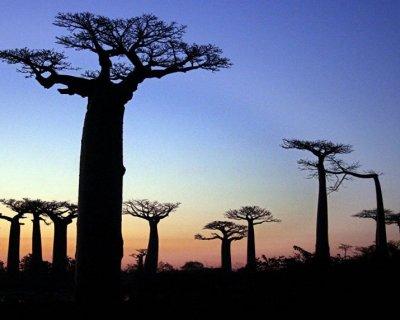 تصاویر جذاب جنگل های جهان