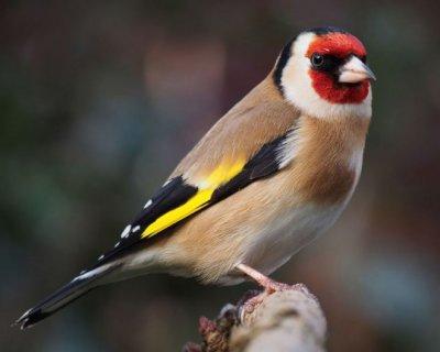 تصاویر جذاب پرندگان