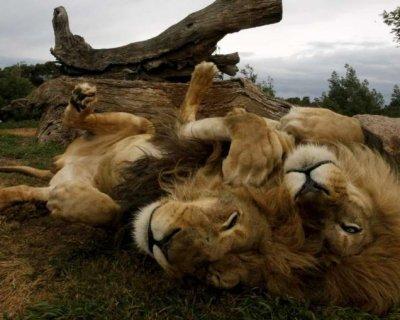 شکار حیوانات وحشی از جنس زیبایی