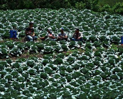 تصاویر دیدنی روز؛ از مزارع کلم تا مسابقات اتومبیلرانی