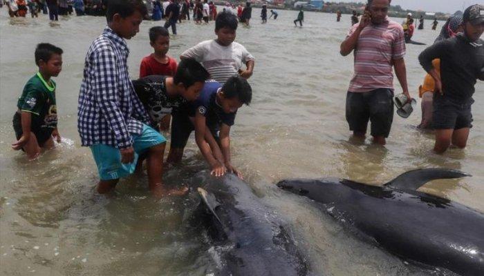 تصاویر دیدنی روز؛ از نهنگهای به گل نشسته تا لحظه شکار افعی آبی